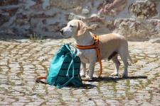 Beagle-Frühlings-Wanderung am Cospudener See/Leipzig